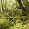 屋久島の旅 5日目 白谷雲水峡