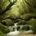 屋久島に一週間ぐらい行く人のためのまとめ(2012年版)